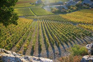 vin-savoie