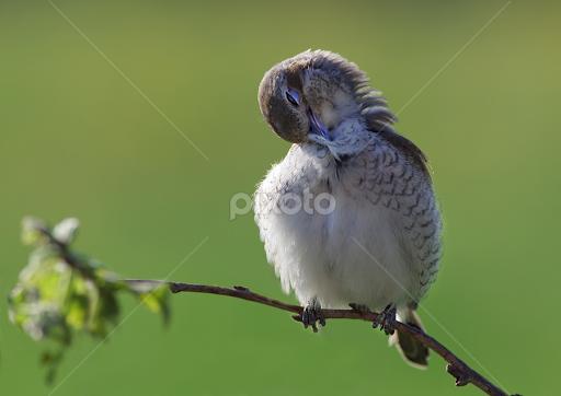 Makeup For A Good Night Birds Animals Pixoto