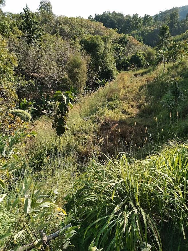 タイの自給自足農家の畑