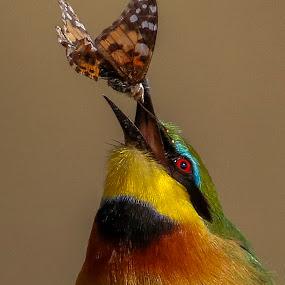 The catch by JD Lotz - Animals Birds