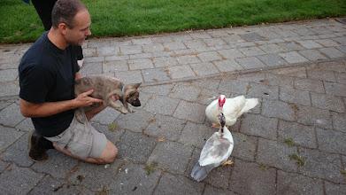 Photo: socialiseren op de kinderboerderij. Max wil wel even met deze eenden spelen...