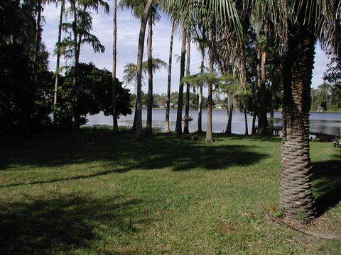 Photo: This is the view from the Log Cabin screened porch. Lots of palm trees and lots of sunshine!