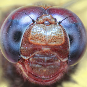 Full Face II by Abdie Dedde Darrell - Animals Other ( macro animal stawa )