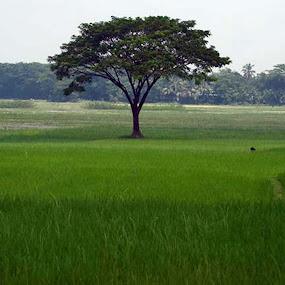 Green World by Md Zakir Hossain - Nature Up Close Gardens & Produce