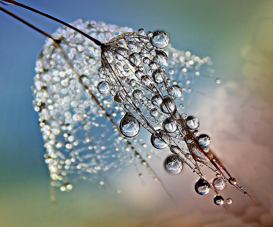 Secrets Of Beauty At Dawn by Marija Jilek - Nature Up Close Natural Waterdrops