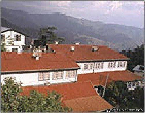Springfield's,Shimla