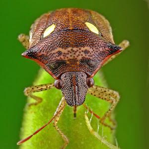 kumbang6.jpg