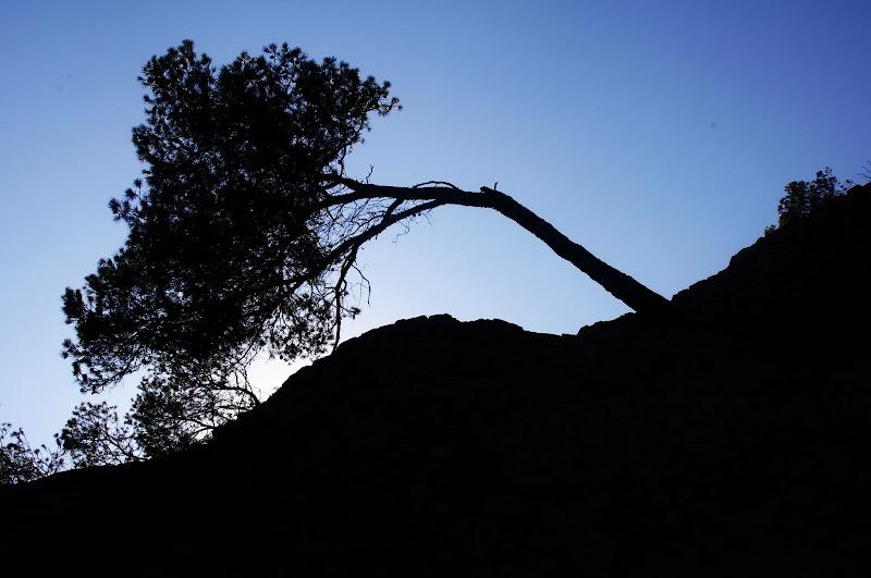 La forza della natura.  di micphotography