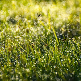 Grass Rays - 2 by Adrian LUPSAN - Nature Up Close Leaves & Grasses ( grass, green, light, spring, rays )