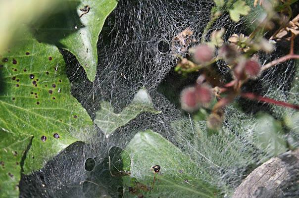 trova il ragno di marcello_ilconte