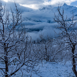 Its a snow white day by Dharitri  Walia - Landscapes Mountains & Hills ( #white, #weather, #snow, #snowwhite, #mountain, #cold, #winter )