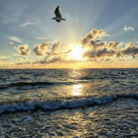 Bird over paradise by Jim Signorelli - Landscapes Sunsets & Sunrises ( sunset )