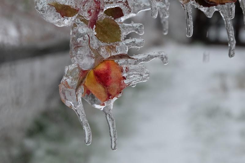 Frozen di Merlograziano