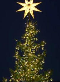 Đức Thánh Cha cảm ơn những người dâng tặng cây thông giáng sinh và hang đá