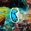 Anna's Chromodoris
