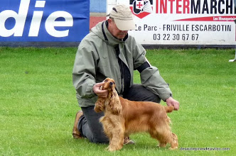 Photo: Do Not Disturb of Merrily - 1er EXC -CACS - Meilleur de race - 3ème du 8ème groupe