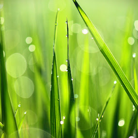 Paddy by Jeffry Benny Anggara - Nature Up Close Leaves & Grasses ( animals, nature, insect, landscape, people )