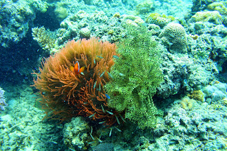 Photo: Odd, red anemone