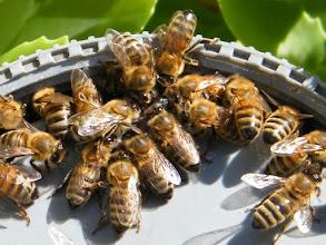 Photo: Nourrissage des abeilles 20.09
