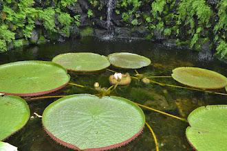 Photo: Giardini La Mortella