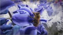 """Photo: """"In urma intepaturii de albine, glandele producatoare de venin raman atasate la nivelul acului, astfel incat veninul este pompat in continuare in corpul victimei """" La fel si cu vorbele..spuse desarte..ele nu dor doar pe moment...  Imag. din Turda,  pe Str. Tineretului - 2019.03.07   https://www.facebook.com/photo.php?fbid=2774123209282086&set=a.1604299126264506&type=3&theater"""