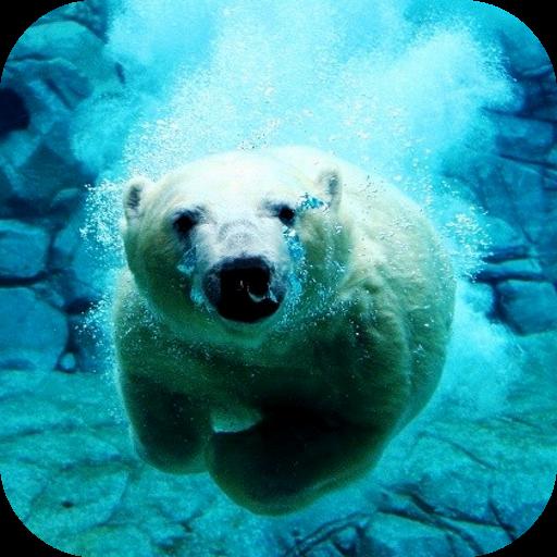 ホッキョクグマ泳ぐビデオLWP 個人化 App LOGO-硬是要APP