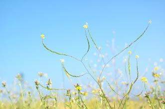Photo: Antennae.