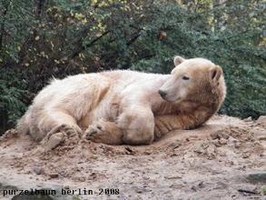 Photo: Eisbaerchen Knut kuschelt auf dem Sandhaufen ;-)