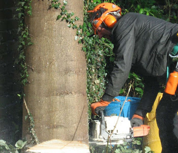 worcester tree felling service