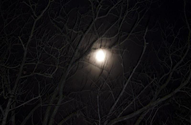 the moon in the forest di antonello_gioioso