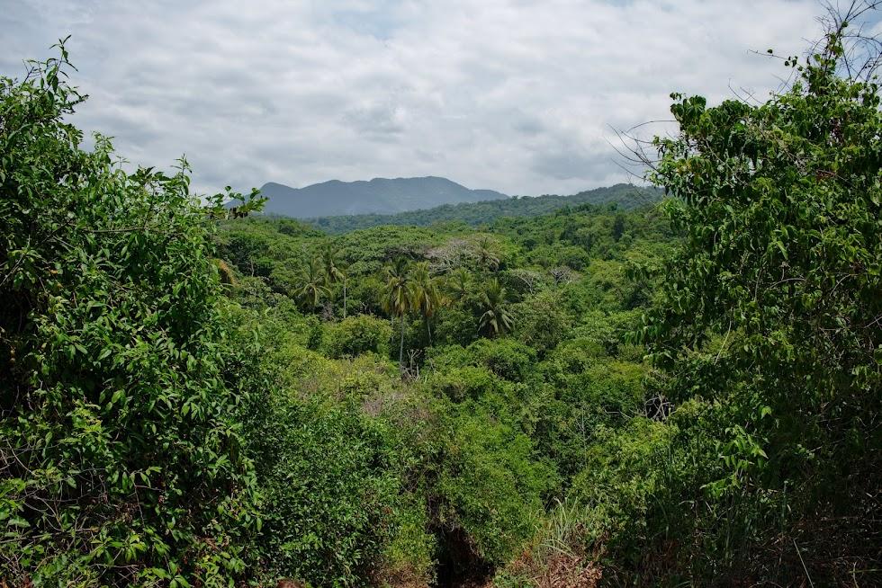 Tayrona Park, dżungla