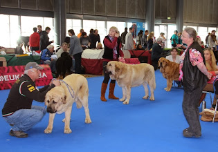 Photo: selection of Best of Breed Handsome Tornádo Erben - Best Junior Vacceo de Fuente Mimbre - Best male Europa Tornádo Erben - Best female + Best of Breed