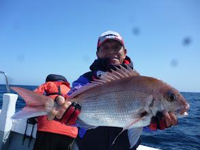 Photo: いいサイズの真鯛です!