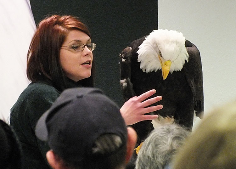 Visit the Alaska Raptor Center in Sitka to see injured bald eagles being nursed back to health.