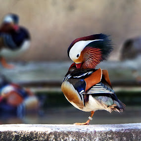 by Deepraj Das - Animals Birds