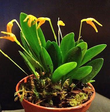 Orkideér och Bromelier