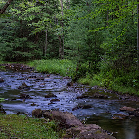 Stream in the forest by Dave Bradley - Landscapes Forests ( green, outdoor, pennsylvania, forest )