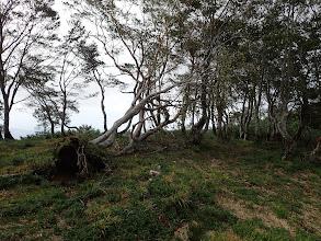 山頂にも倒木