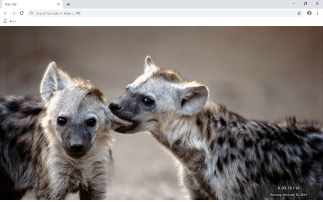Hyena New Tab & Wallpapers Collection