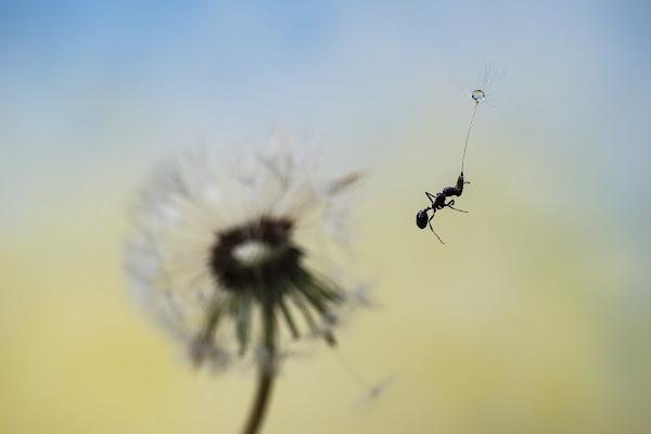 Mary Poppins di fabio_sartori
