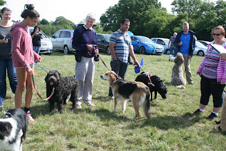Photo: Kathrine (Buddy's mum), Natasha and Tilly Labradoodle, Anne and Gretl Golden X, Munish and Dicer Lab, Paul and Brian Labradoodle and Cate (Mack's mum)
