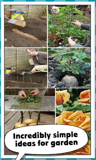 エデンの庭のバラ