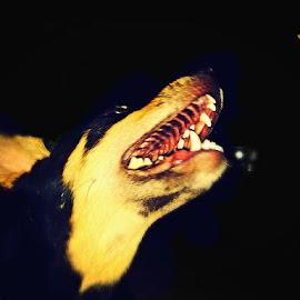 A black colour dog by Sobhraj Debnath - Animals - Dogs Playing ( nature, black, animal, leaf, dog )