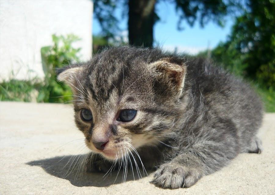 Hello by Helena Moravusova - Animals - Cats Kittens ( kitten, animal )