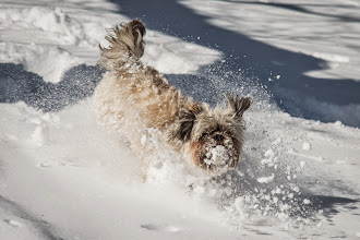 Photo: Ruby playing in the fresh snow at one year old