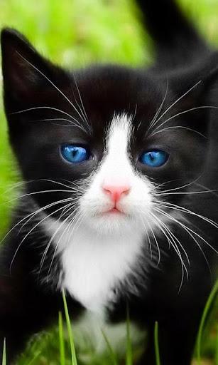 タキシード猫ジグソーパズル