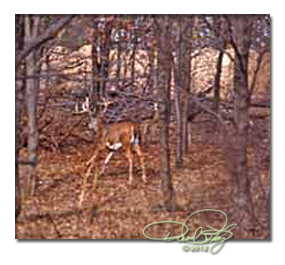 DRO _hunting in new deer country