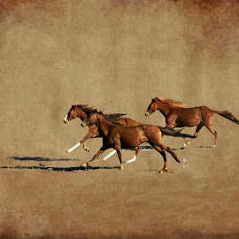 Three horses by Gaylord Mink - Digital Art Animals ( digital, run, animals, horses,  )