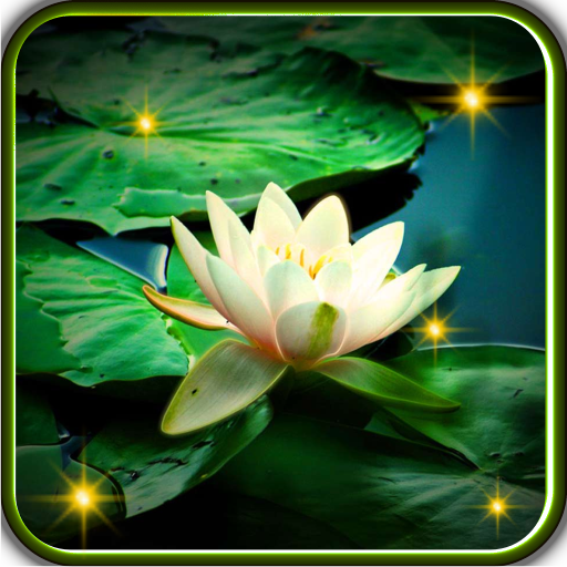 Lilies Water Live Wallpaper Android APK Download Free By Godsproslw