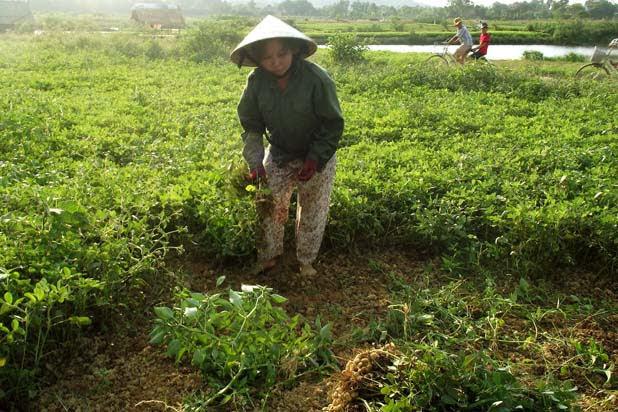 Farming in Thuy Bieu